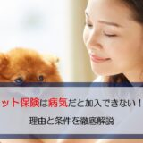 ペット保険は病気持ちだと加入できないことも!理由と条件を徹底解説