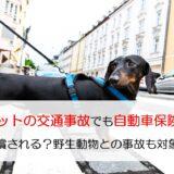 ペットの交通事故でも自動車保険で補償される?野生動物との事故も対象になる?